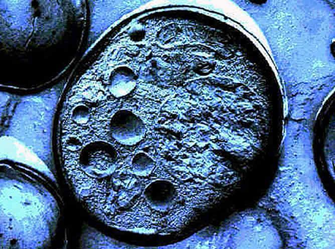 Resultado de imagen de celula real